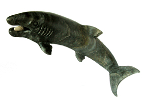 Helicoprion_from_Dashceren